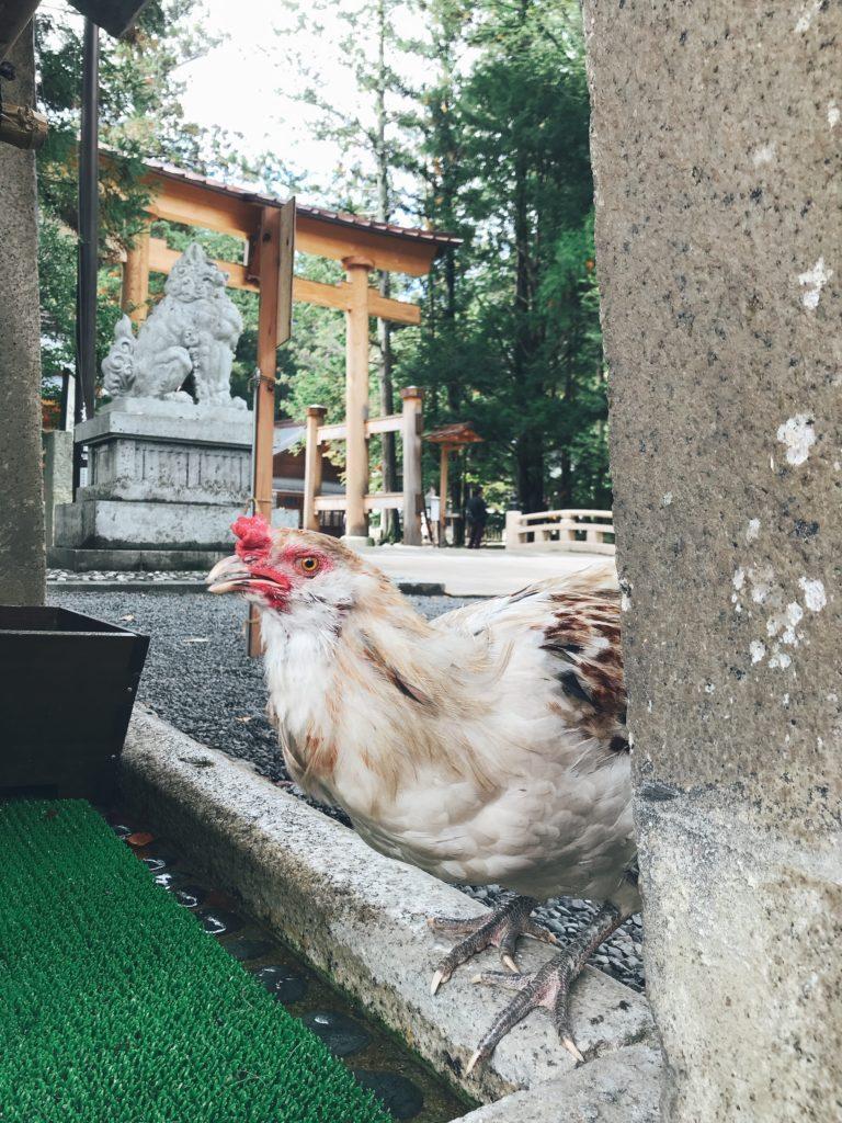 長野県安曇野市穂高神社の水飲み場の鶏の写真