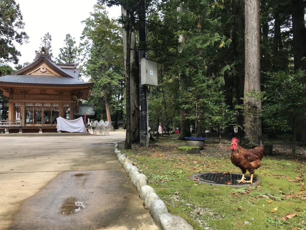 長野県安曇野市穂高神社の茶色い鶏の写真