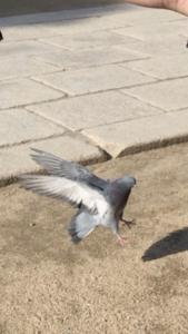四柱神社の境内でハトが羽をはばたかせている写真