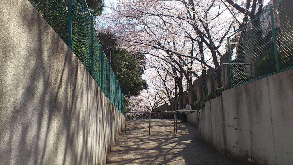 後楽園駅近くにある桜が咲く登り坂